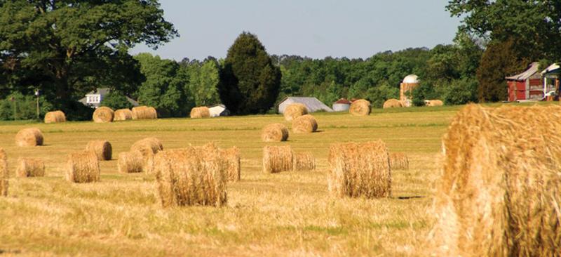 Farms-Hay-Bales3
