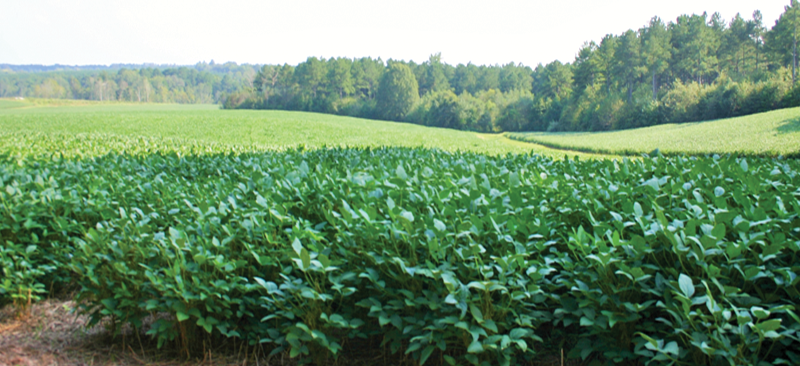 Farms-Soy-Beans2