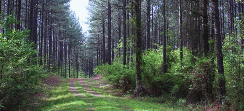 Woods2